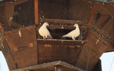 Lichtwurzeln und Tauben